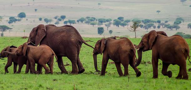 Wildlife Safaris in Akagera National Park
