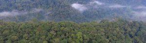 Nyungwe Forest Park in Rwanda