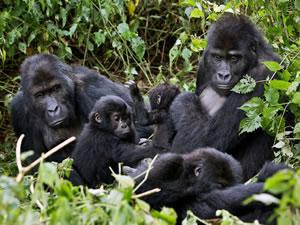 Gorilla Trek in Mgahinga