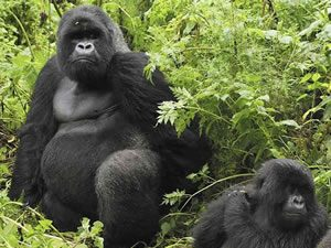 Gorilla Trek in Virunga