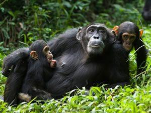 Bwindi Gorilla Tour