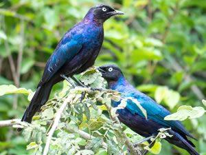 Bird Watching in Akagera