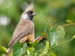Birding in Bwindi