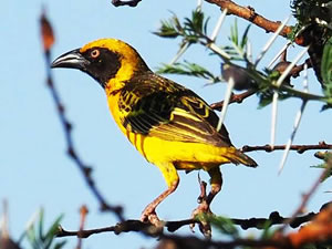 Birding in Kidepo Valley Park