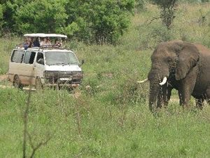 Game Drives in Murchison Falls