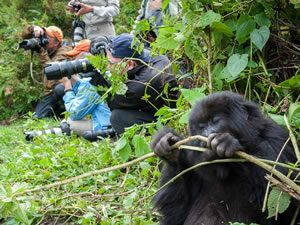 Gorilla Trek in Volcanoes