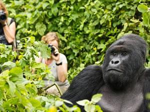 Gorilla Trekking in Virunga