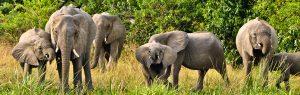 Wildlife safaris in Akagera