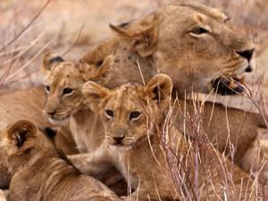 3 Day Amboseli