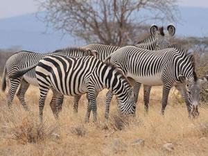 5 Day Amboseli