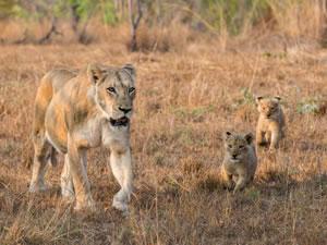 8 Day Amazing Kenya